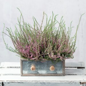 Heather Duo Planter