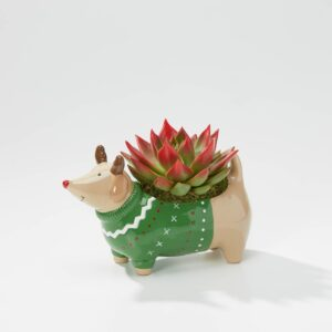 Dasher Dog Planter
