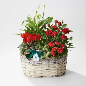 Deluxe Christmas Planted Basket