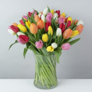 50 Mixed Tulips