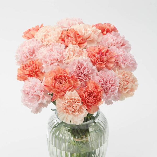 Coral Carnation Letterbox